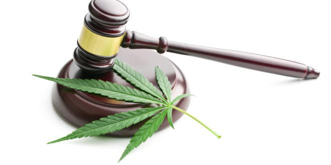 Piden legalizar la producción de marihuana para uso medicinal