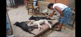20 animales aparecen muertos en Veracruz