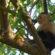 Tamalera le obsequio un bolillo al mono capuchino