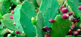 Estudiantes mexicanos crean ladrillo con baba de nopal